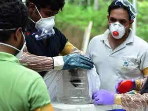 nipah scared people in himachal 18 bats found dead in shimla