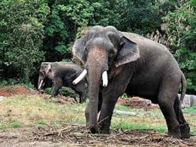 elephant killed a man in chhattisgarh