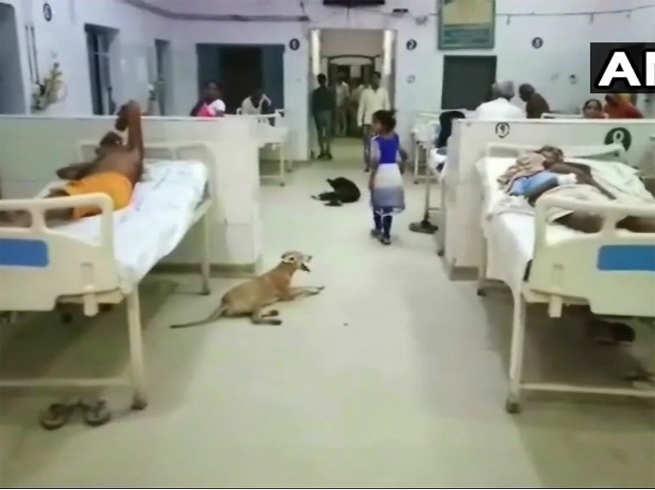 dogs seen inside wards of district hospital of hardoi