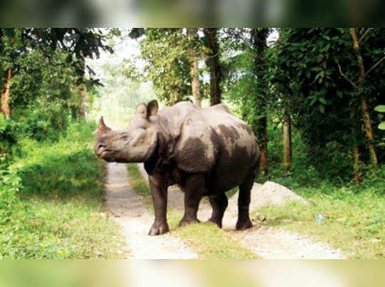 পুজোয় সাফারি অনিশ্চিত জলদাপাড়ায়
