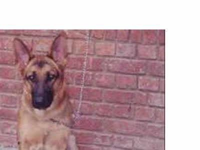 अब दरोगा के कुत्ते को ढूंढेगी UP पुलिस (प्रतीकात्मक तस्वीर)