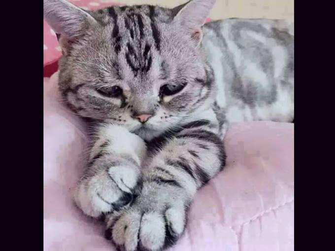यह है दुनिया की सबसे दुखी बिल्ली