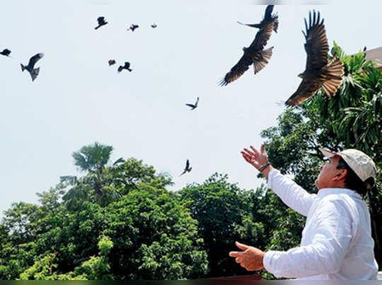 মগডালে পেঁচার বাসায় দানাপানি পাঠান অরুণলাল