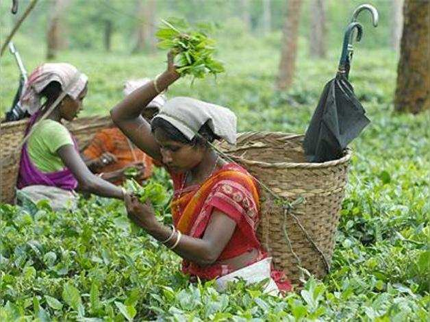 Stalemate in plantation workers wage settlement gets GoI intervention