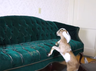 Video Jumping goats prove why practice makes perfect