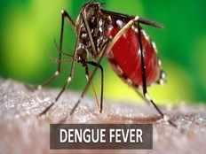 dengue fever symptoms treatment and home remedies
