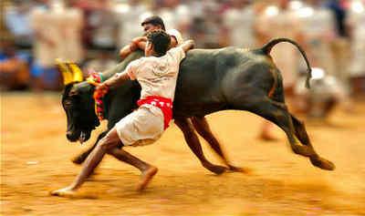 Tamil Nadu News: புதுக்கோட்டையில்