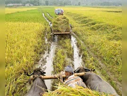 राजस्थान: किसानों के लिए 6 और सिंचाई योजनाएं
