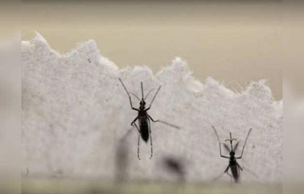 डेंगू और चिकनगुनिया बुखार के बारे में जानें ये कुछ अहम बातें