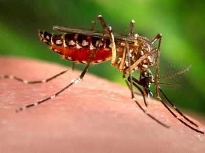 झोपड़पट्टी से ज्यादा बिल्डिंग्स में डेंगी के मच्छर
