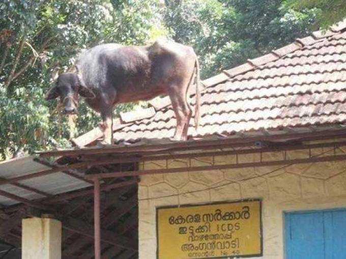 देखिए, जानवर पहुंचे कैसी-कैसी जगह!