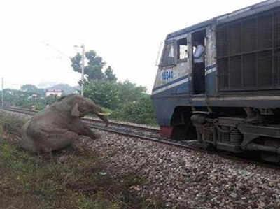 ट्रेन की टक्कर से घायल हुआ था हाथी