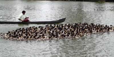Ducks-Xinhua
