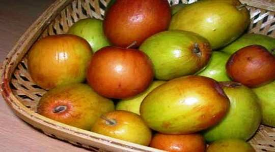 Health benefits of Ber fruit: రేగి పండ్లు