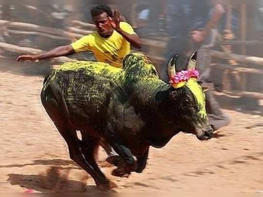 அவனியாபுரம் ஜல்லிக்கட்டு பிரத்யேக வீடியோ