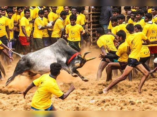 அவனியாபுரம் ஜல்லிக்கட்டு: 60 மாடுபிடி வீரர்கள் காயம்