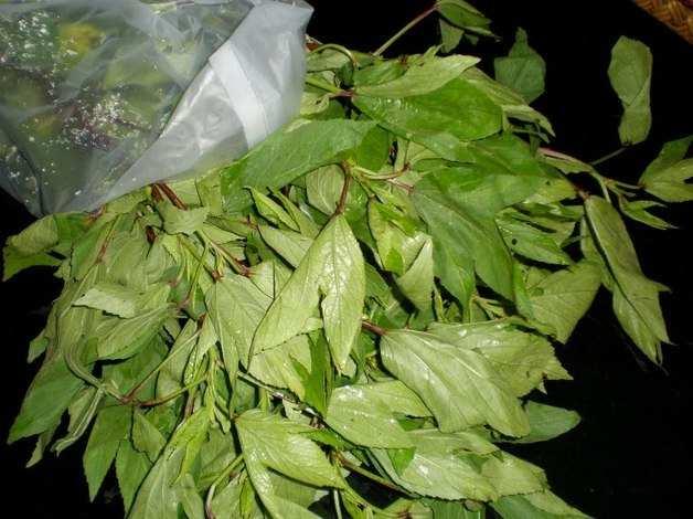 sorrel_leaves