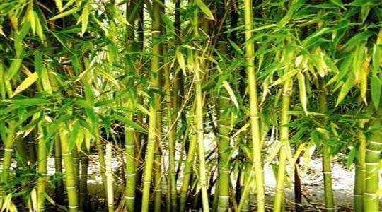 Nagpur News: वनेतर बांबू परवानामुक्त