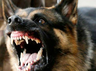 dogs become dangerous for these species