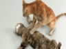 cat gif goes viral