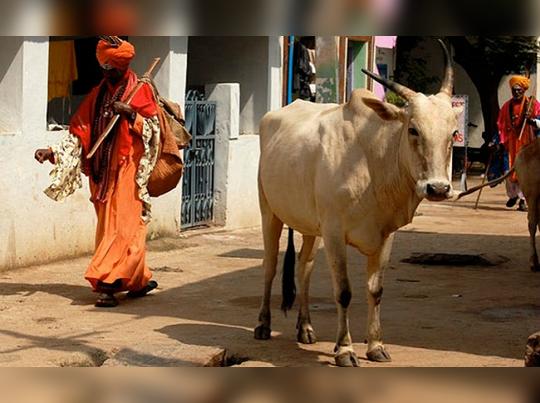 দেশ জুড়ে গোরু-মোষ কেনাবেচায় কেন্দ্রের অঙ্কুশ