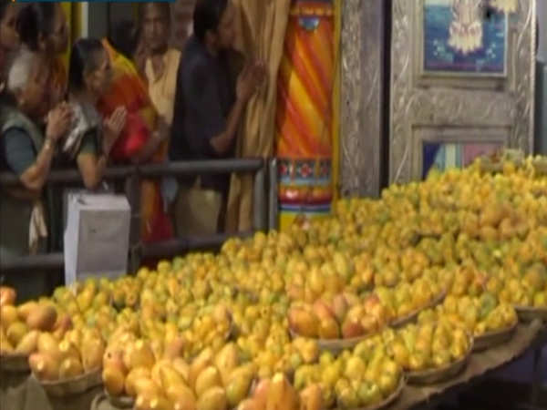 watch 11000 mangoes offered to deity at vadodara temple