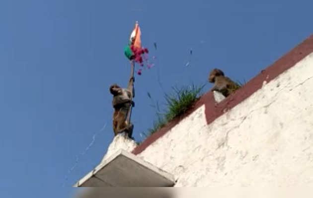 स्कूल में बंदर ने फहराया झंडा, देखते रह गए लोग