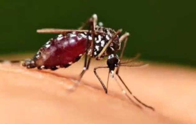 विश्व मच्छर दिवस: मच्छरों के बारे में ये फैक्ट्स जानते हैं आप?