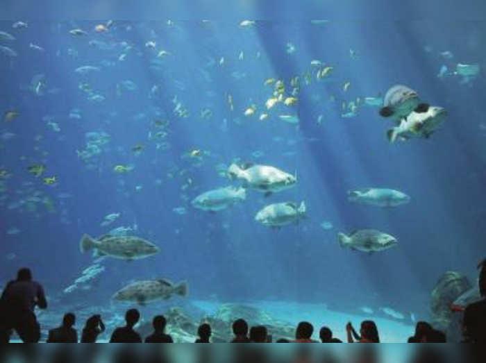 ३० टक्के मासे होतील नष्ट!