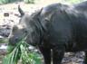 guwahati zoo celebrated fourth birth anniversary of sanatan youngest rhino of the zoo