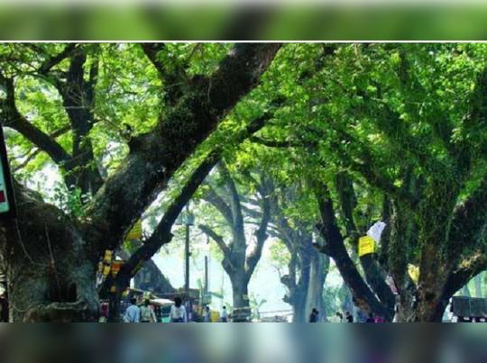 খারিজ রাজ্যের আর্জি, স্থগিতই থাকল যশোহর রোডে গাছ কাটা