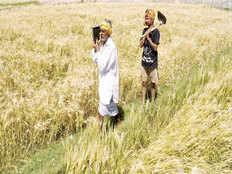crop insurance farmers taken for premium ride