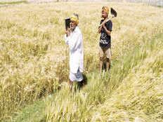 crop insurance farmers taken for premium ride