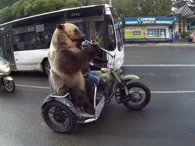 सड़क पर निकला भालू, लोग हुए हैरान
