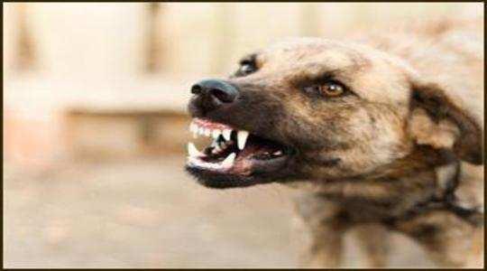 Aurangabad News: बिर्याणीत चक्क कुत्र्यांचे