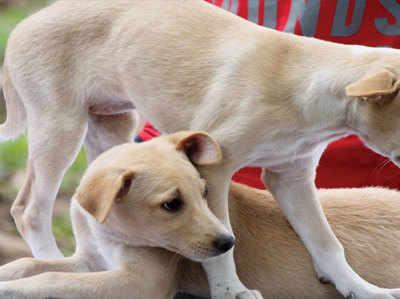 पंजाब में कुत्ते-बिल्ली पालने पर देना होगा टैक्स