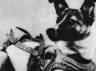 touching story of laika the stray dog which became the worlds first cosmonaut