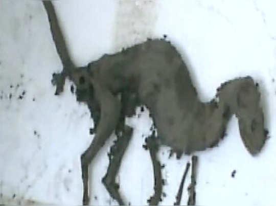 এটা কি ডাইনোসর? উত্তরাখণ্ডে মিলল টি-রেক্সের মতো প্রাণী