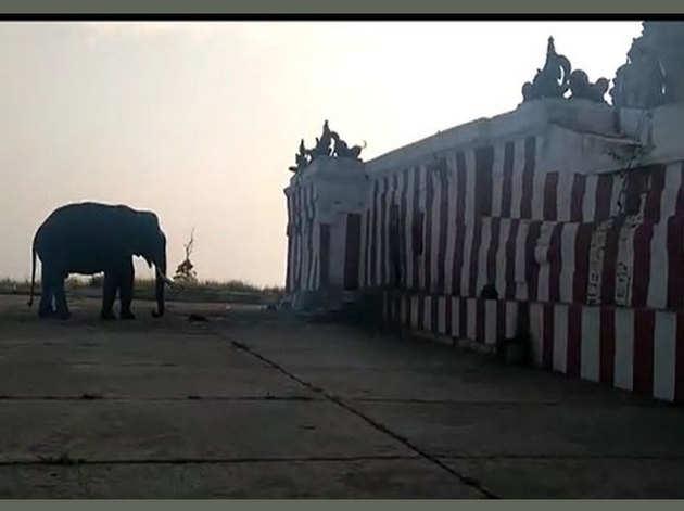 रोज मंदिर में दर्शन के लिए आता है यह हाथी