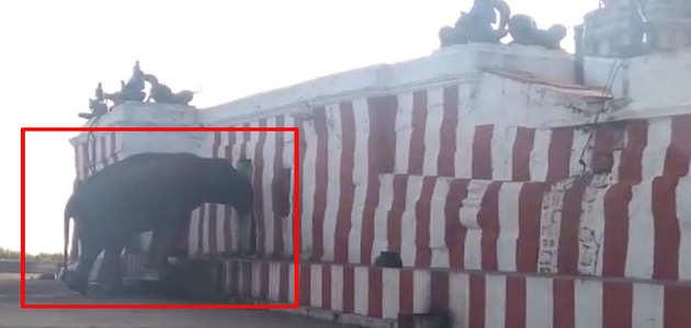 प्रसाद लेने के लिए रोज मंदिर पहुंचता है यह हाथी
