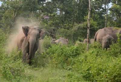 elephant attac