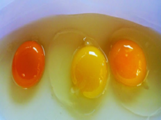 how to determine original egg by its yolk color