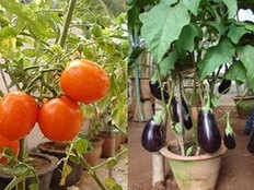 tips for growing an organic vegetable garden at home