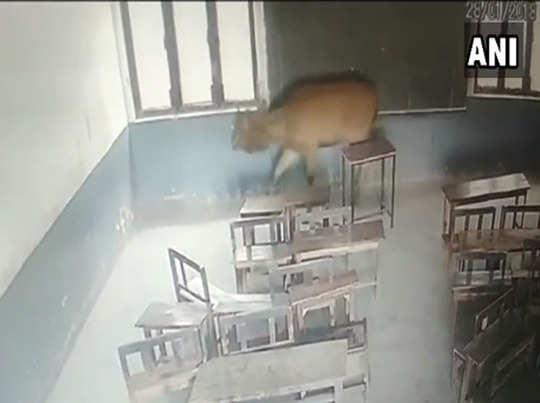 क्लास में घूमता हिरन