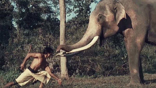 exclusive vidyut jammwal seeks the blessing of the lord ganesha in junglee