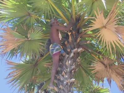 पेड़ पर चढ़ें मुरुगांडी