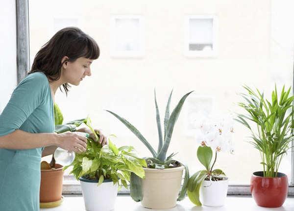 बेहतर नींद पाने में मदद करते हैं ये पौधे