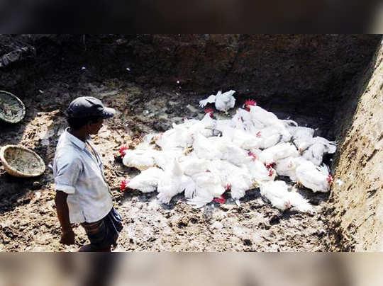bird-flu-story,-facebook_647_102116022216