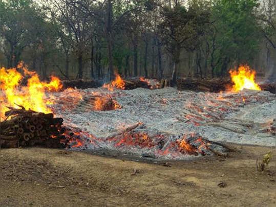 आग के हवाले किए जंगल