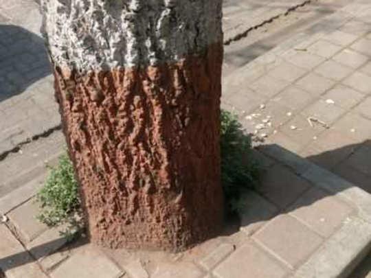 झाडे कशासाठी?